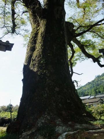 resilience 大木